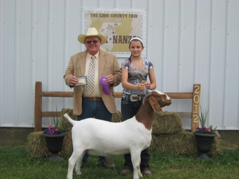Wylde Green Acres Emerald #10535954 - Show Goat Winner Group