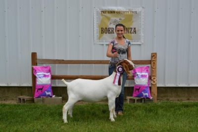 Wylde Green Acres Periwinkle - Yearling Reserve Champion